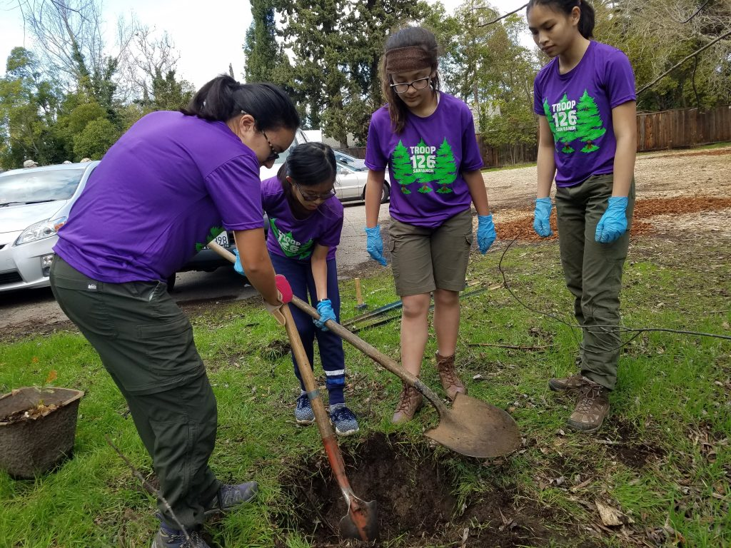 Scouts planting trees